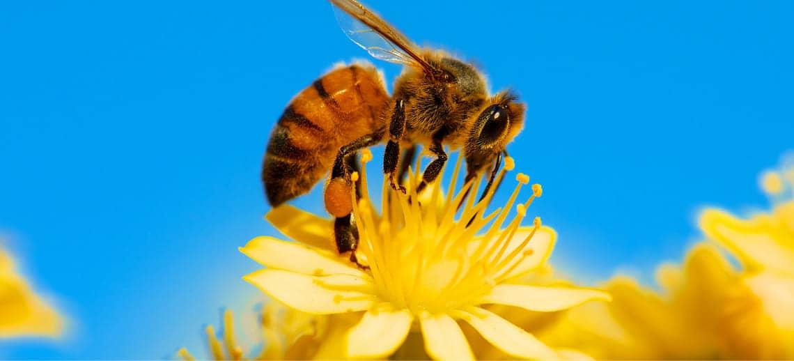 Пчела. Мед. Косметика