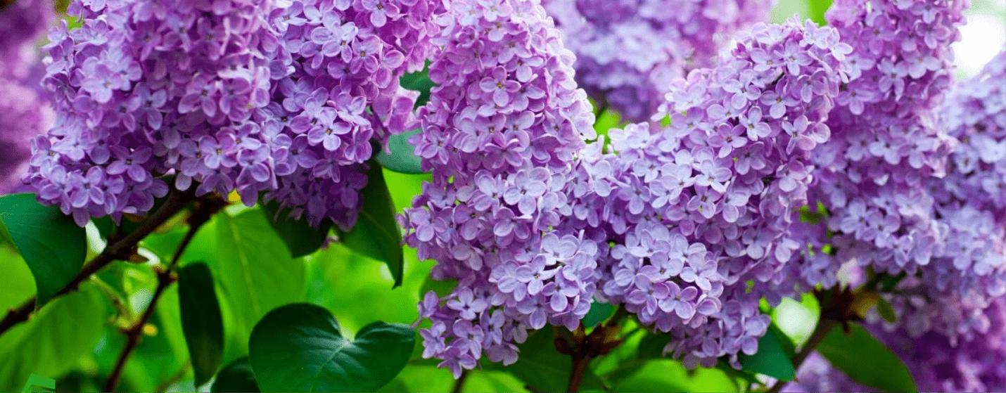 Весна-красна. Обзор сывороток для лица